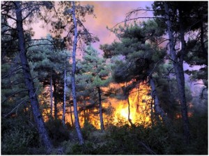 orman-yangini