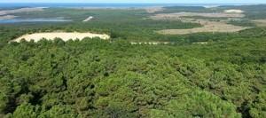 kuzey-ormanlari