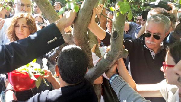 Bölge halkı ve üniversiteliler, ağaçları sarılarak korumaya çalıştı.