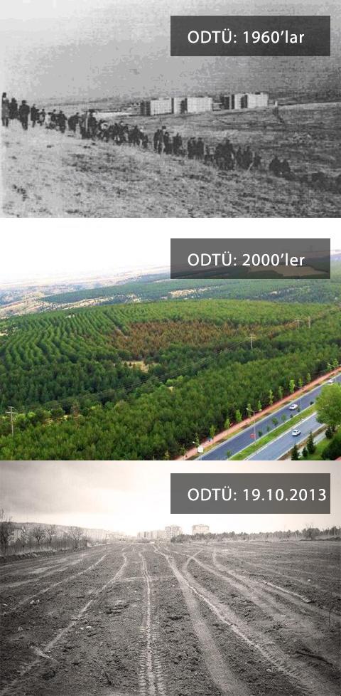 ODTU Ormanlari